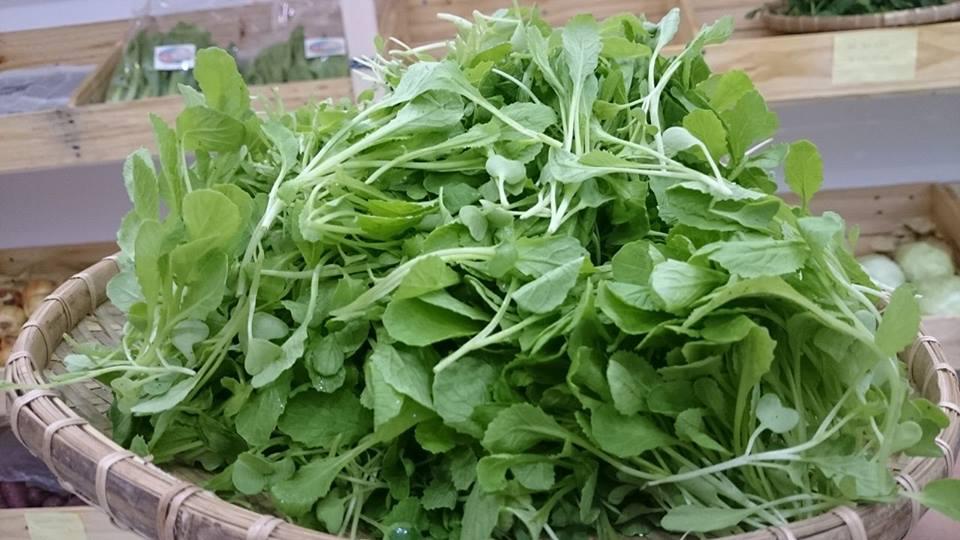 Rau mầm cải xanh nấu tôm 02